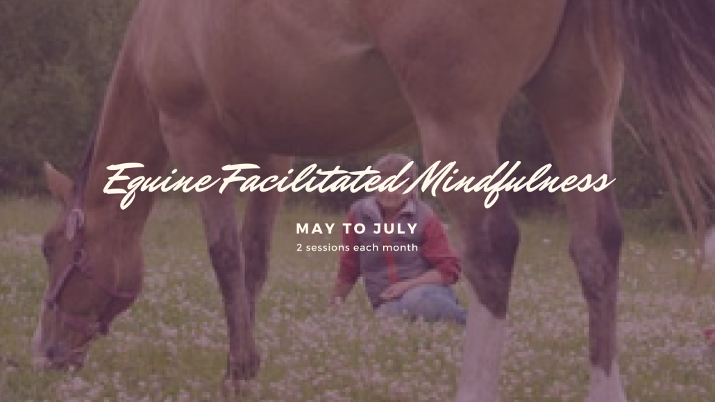Equine Facilitated Mindfulness